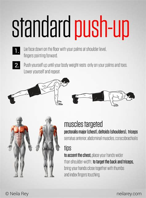 Standard Push-Up + Muscle Map | Push up muscles, Fitness